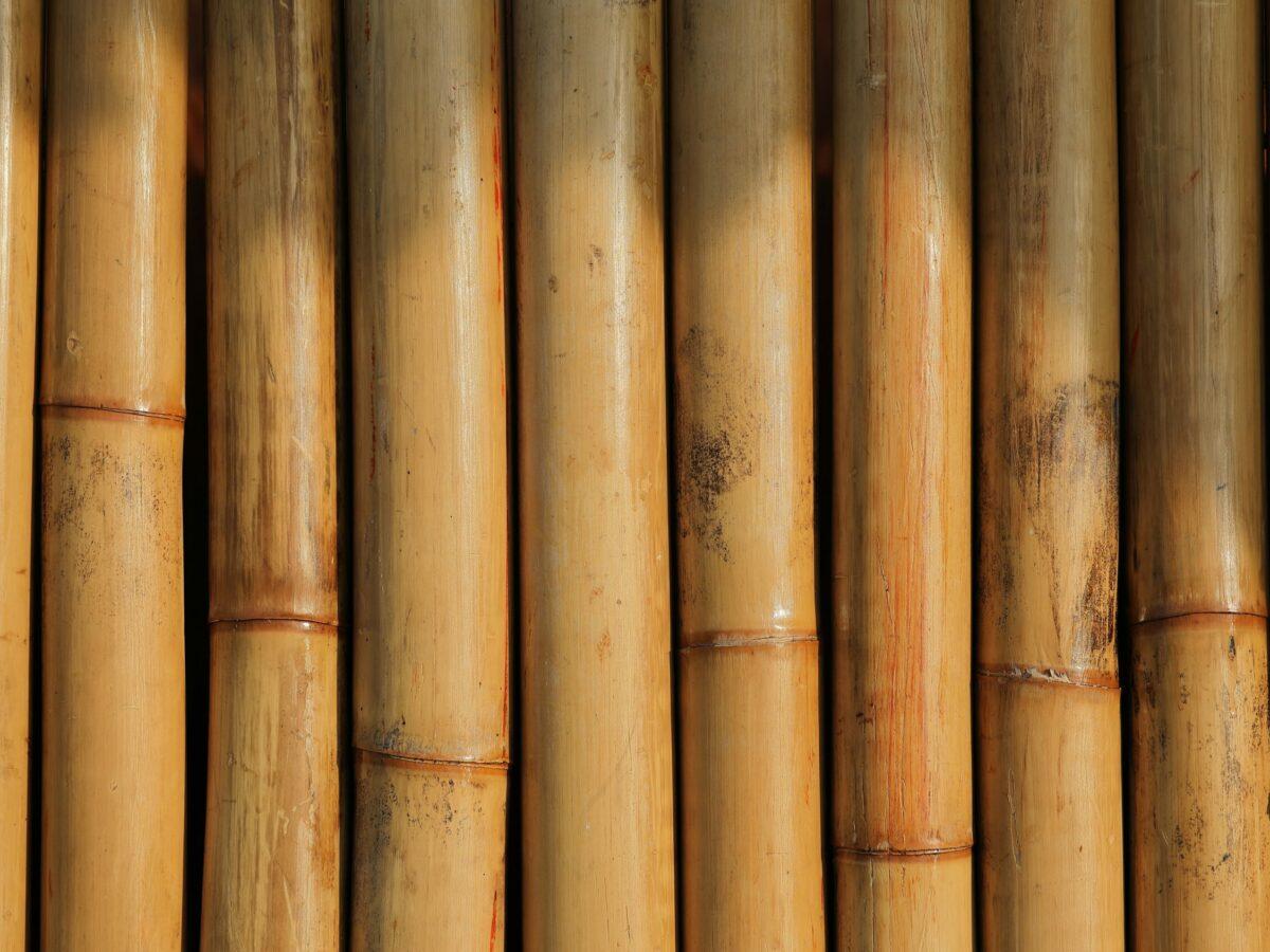 Bambushalme von vorne.