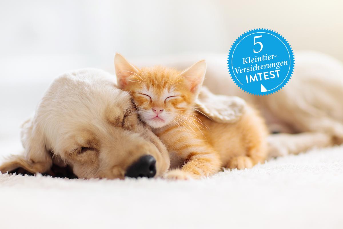 Heller Welpe und orangenes Katzenbaby schlafen aneinander gekuschelt auf heller Decke, blauer Stempel mit 5 Versicherungen darüber