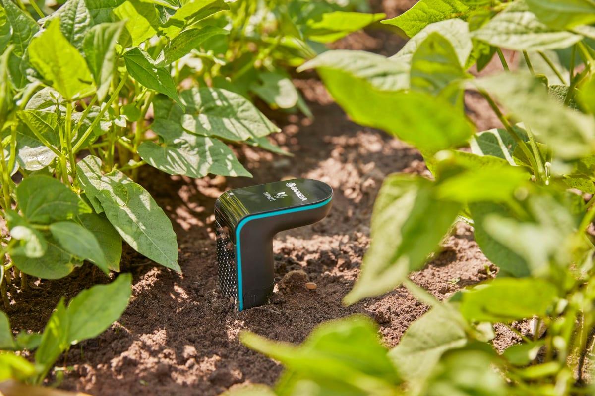 Zwischen grünen Blättern ist ein schwarzer harkenförmiger Sensor im Erdboden zu sehen