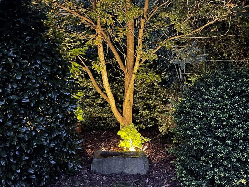 Beleuchteter Baum in der Mitte, umgeben von dunklen Büschen