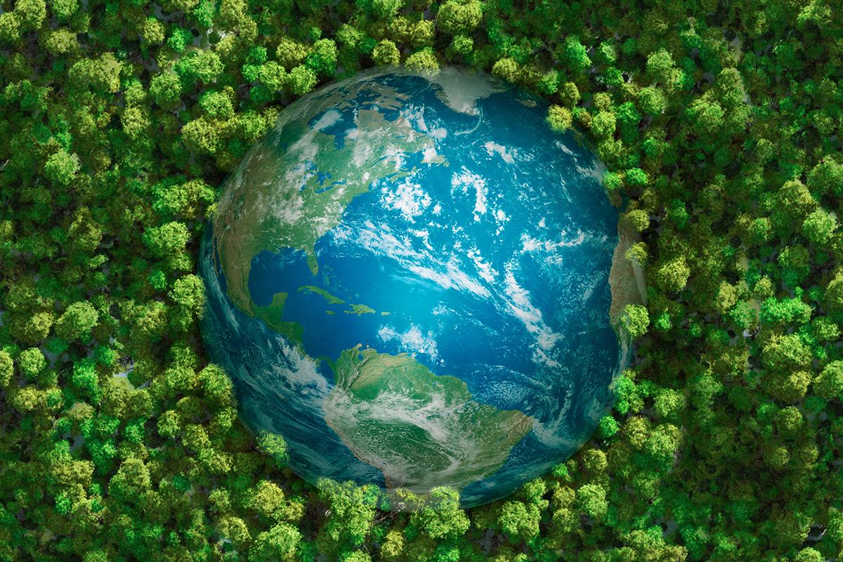 Symbolbild Weltkugel im Wald